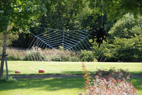 大きな蜘蛛の巣.jpg