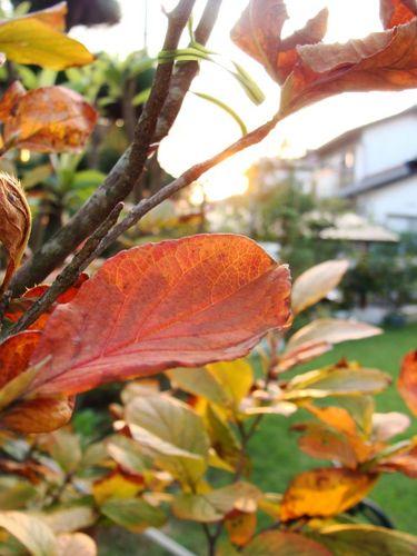 我が家にも秋が来た.jpg