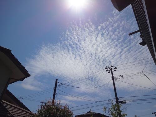 日射しが暑い春の一日.jpg