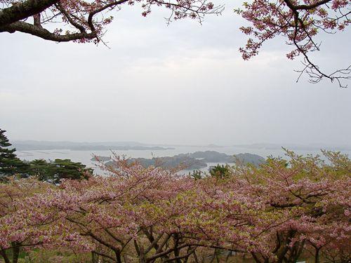 桜海.jpg