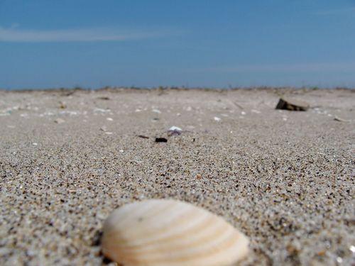 蒲生の砂浜にて.jpg