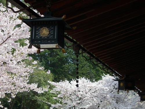 吊り灯篭と満開の桜.jpg