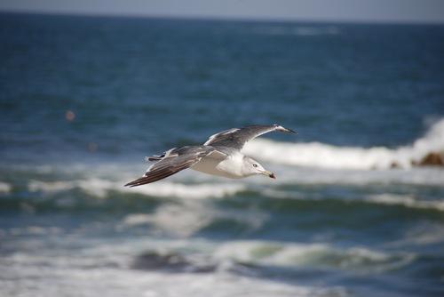 海猫3.jpg