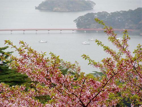 福浦橋と桜.jpg