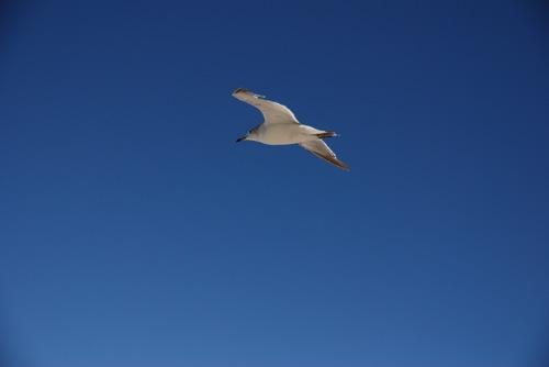 青い空白い海鳥.jpg
