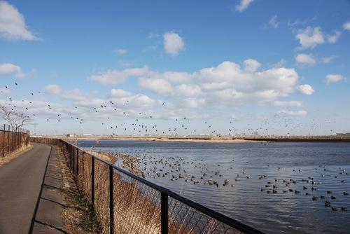 鳥鳥鳥.jpg